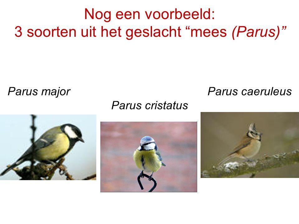 Nog een voorbeeld: 3 soorten uit het geslacht mees (Parus) Parus major Parus caeruleus Parus cristatus