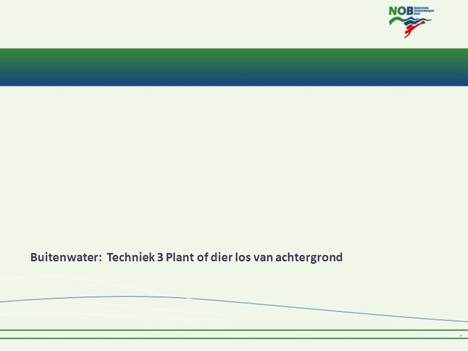 Buitenwater: Techniek 3 Plant of dier los van achtergrond