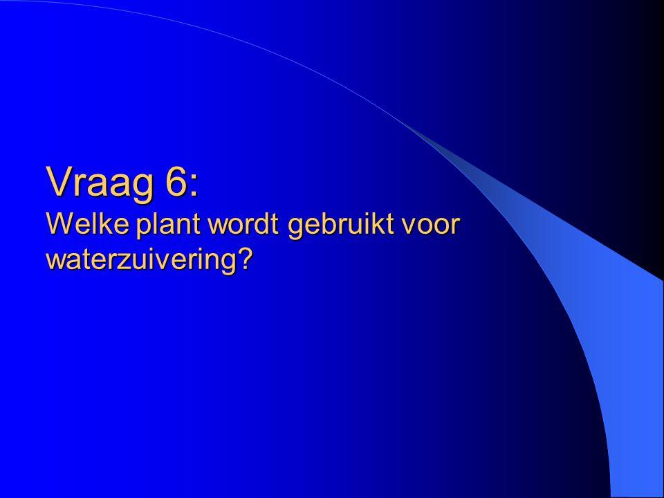 Vraag 6: Welke plant wordt gebruikt voor waterzuivering