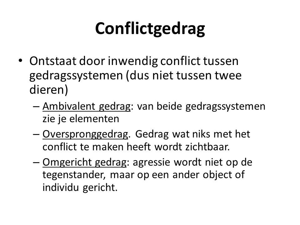 Conflictgedrag Ontstaat door inwendig conflict tussen gedragssystemen (dus niet tussen twee dieren)