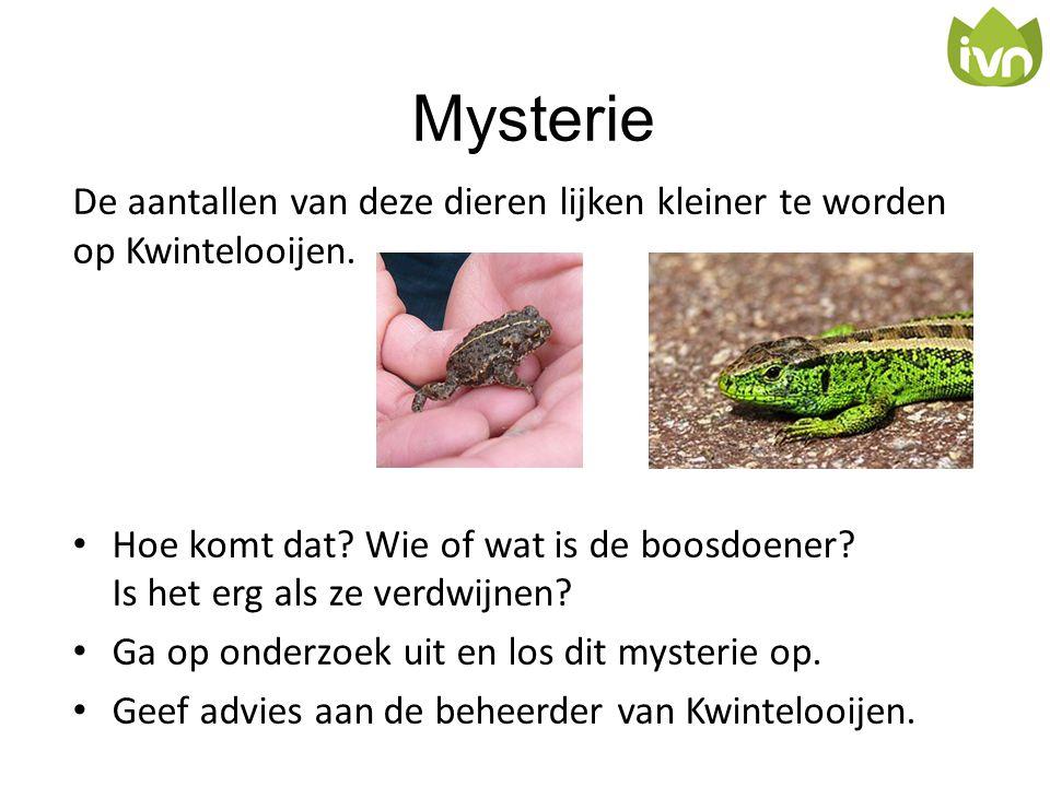 Mysterie De aantallen van deze dieren lijken kleiner te worden op Kwintelooijen.