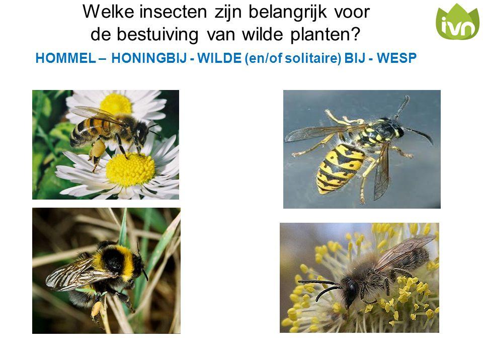 Welke insecten zijn belangrijk voor de bestuiving van wilde planten