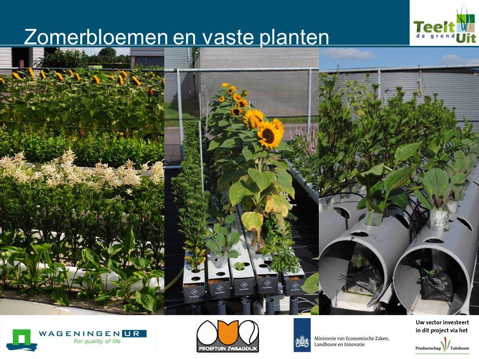 Zomerbloemen en vaste planten