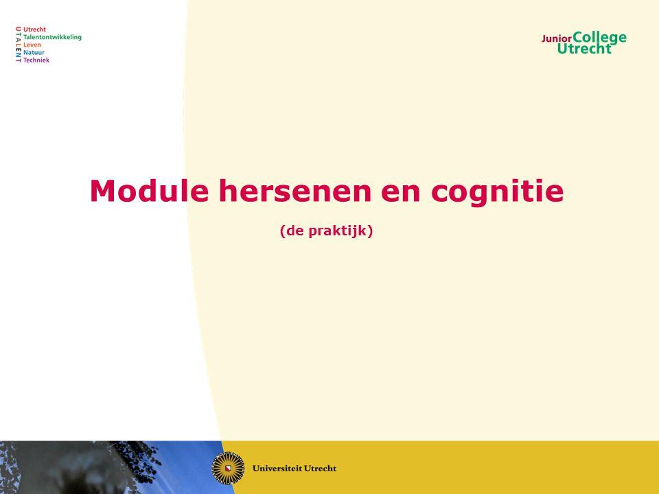 Module hersenen en cognitie (de praktijk)