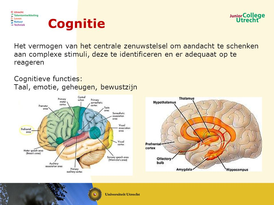 Hersenen en cognitie NIBI Conferentie ppt download