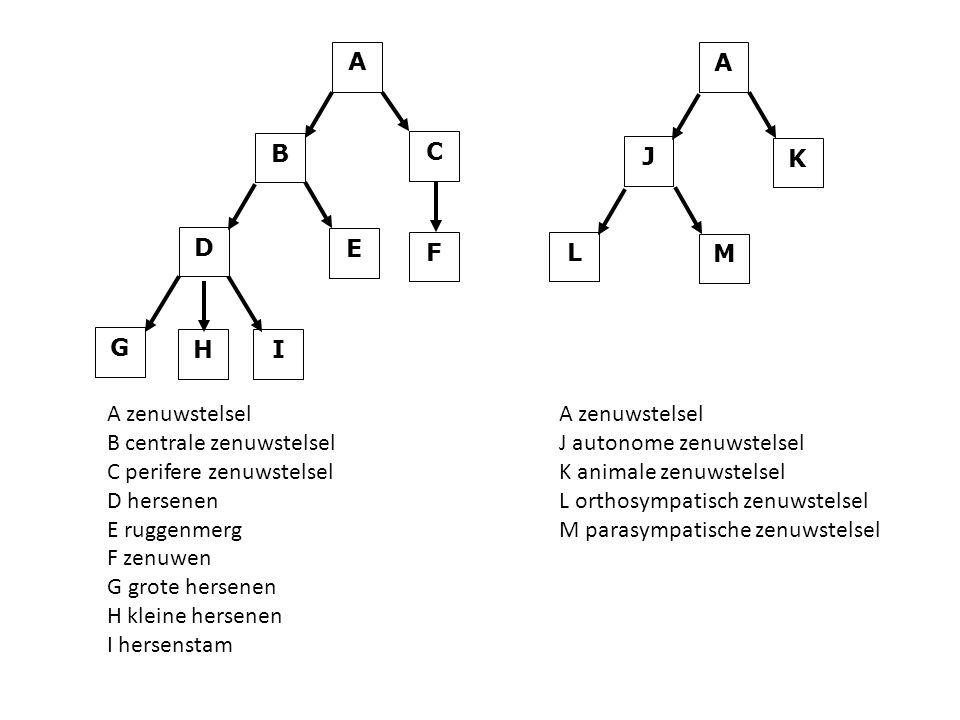 A C. F. I. H. G. B. E. D. K. J. M. L. A zenuwstelsel. B centrale zenuwstelsel. C perifere zenuwstelsel.