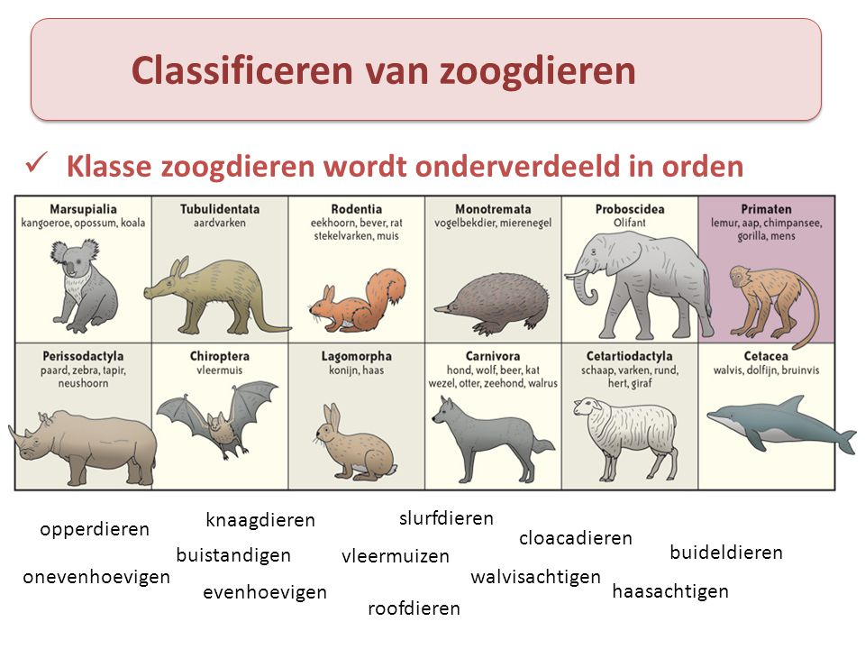 Classificeren van zoogdieren