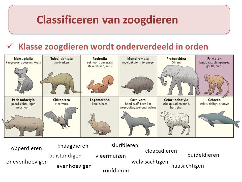 Classificeren van zoogdieren