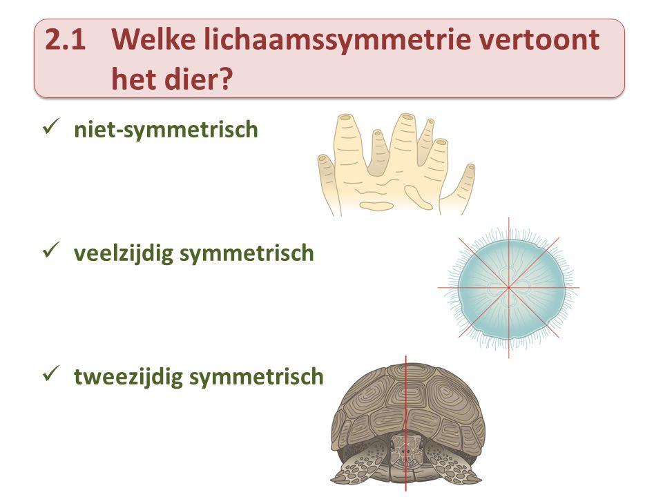2.1 Welke lichaamssymmetrie vertoont het dier