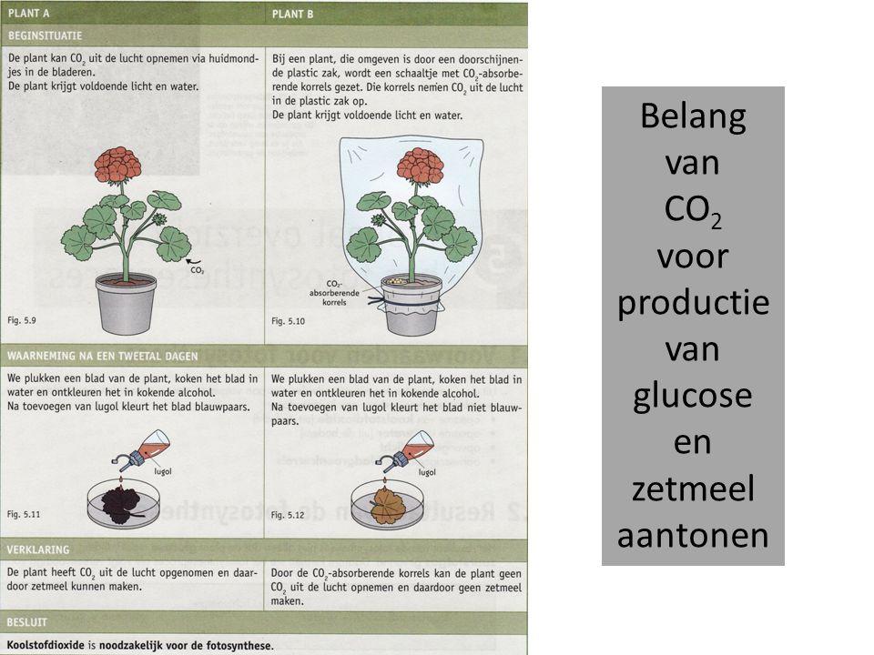 voor productie van glucose en zetmeel