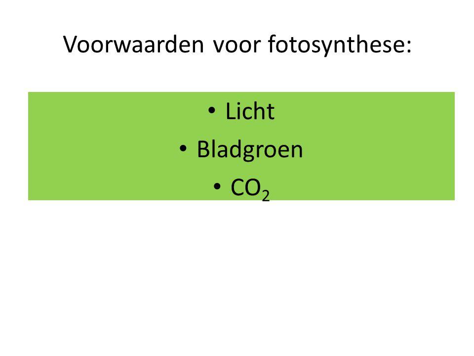 Voorwaarden voor fotosynthese: