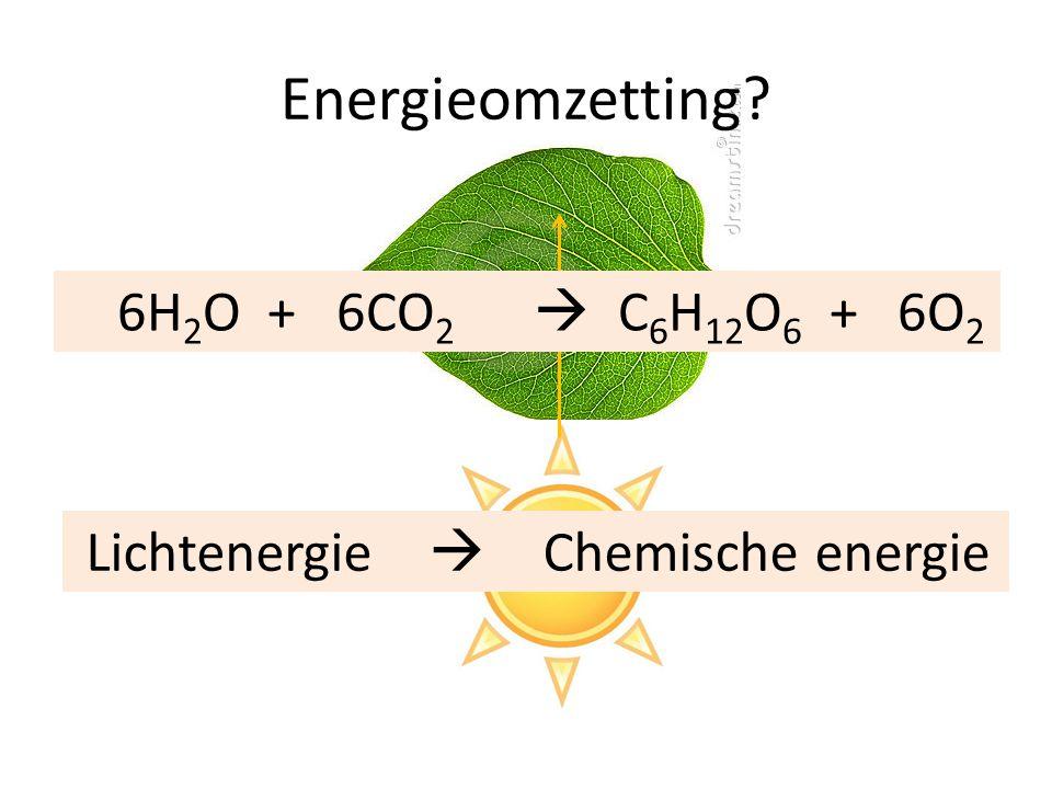 Energieomzetting 6H2O + 6CO2  C6H12O6 + 6O2 Lichtenergie 