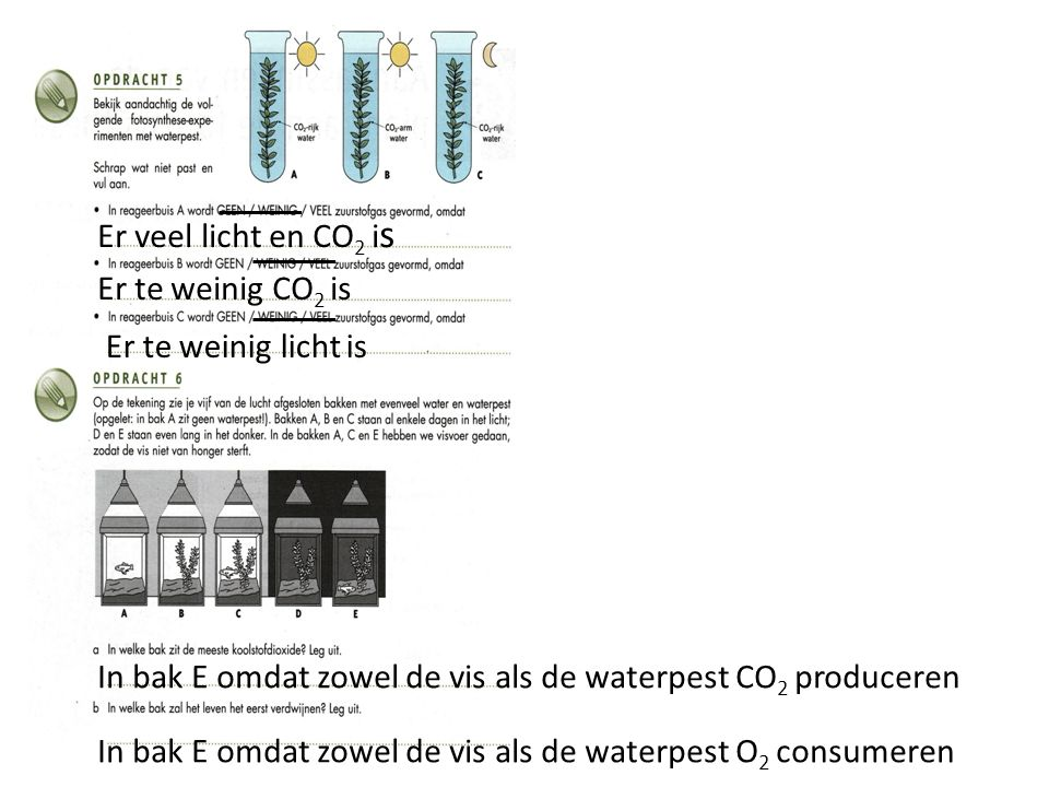 Er veel licht en CO2 is Er te weinig CO2 is. Er te weinig licht is. In bak E omdat zowel de vis als de waterpest CO2 produceren.