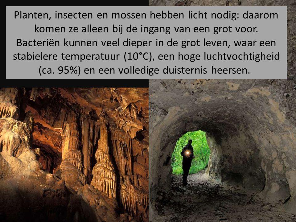 Planten, insecten en mossen hebben licht nodig: daarom komen ze alleen bij de ingang van een grot voor.