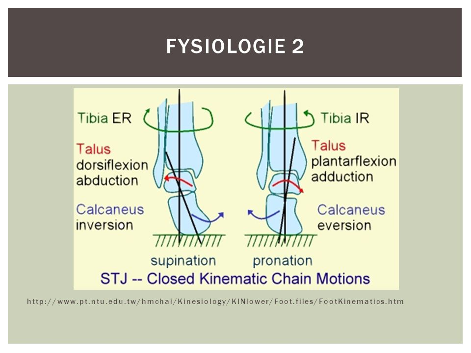 Fysiologie 2 http://www.pt.ntu.edu.tw/hmchai/Kinesiology/KINlower/Foot.files/FootKinematics.htm