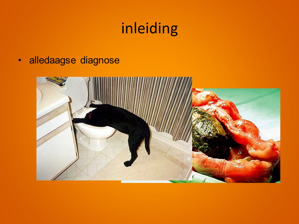 inleiding alledaagse diagnose