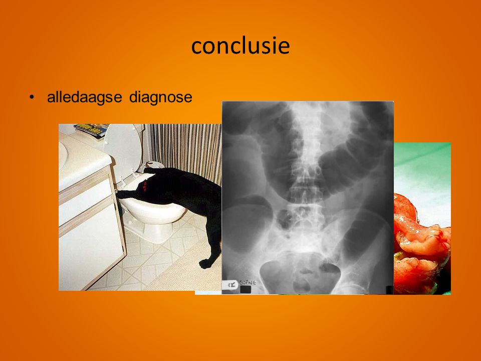 conclusie alledaagse diagnose