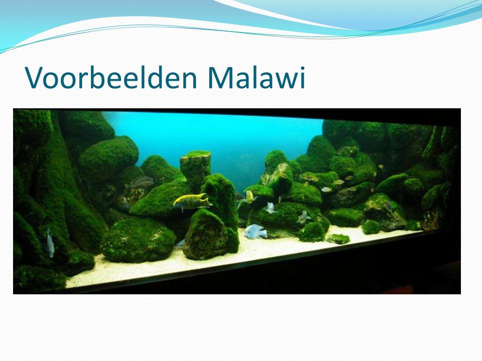 Voorbeelden Malawi