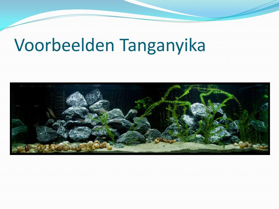 Voorbeelden Tanganyika