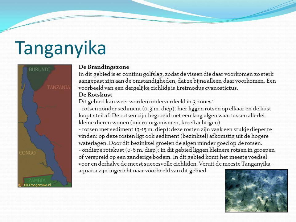 Tanganyika De Brandingszone