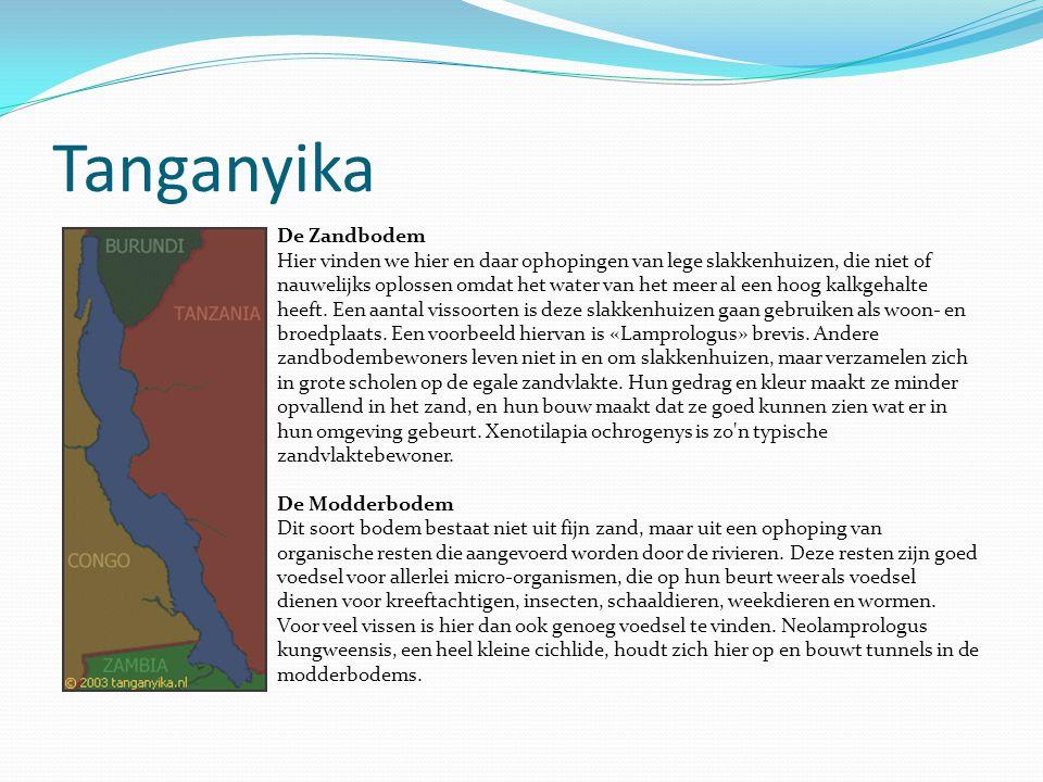 Tanganyika De Zandbodem