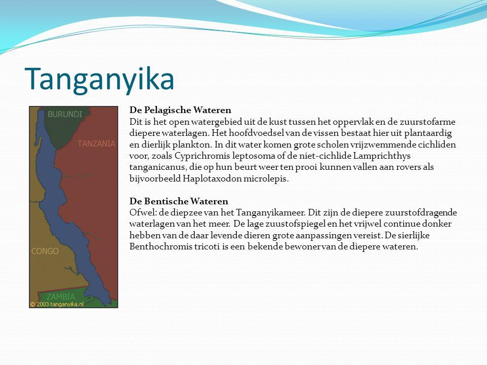 Tanganyika De Pelagische Wateren