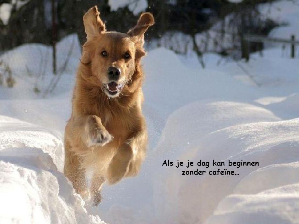Als je je dag kan beginnen zonder cafeïne…