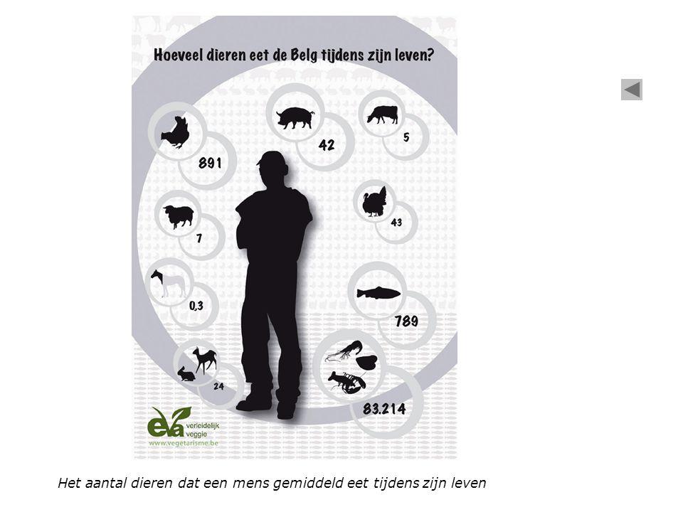 Het aantal dieren dat een mens gemiddeld eet tijdens zijn leven
