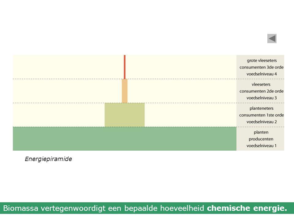 Biomassa vertegenwoordigt een bepaalde hoeveelheid chemische energie.