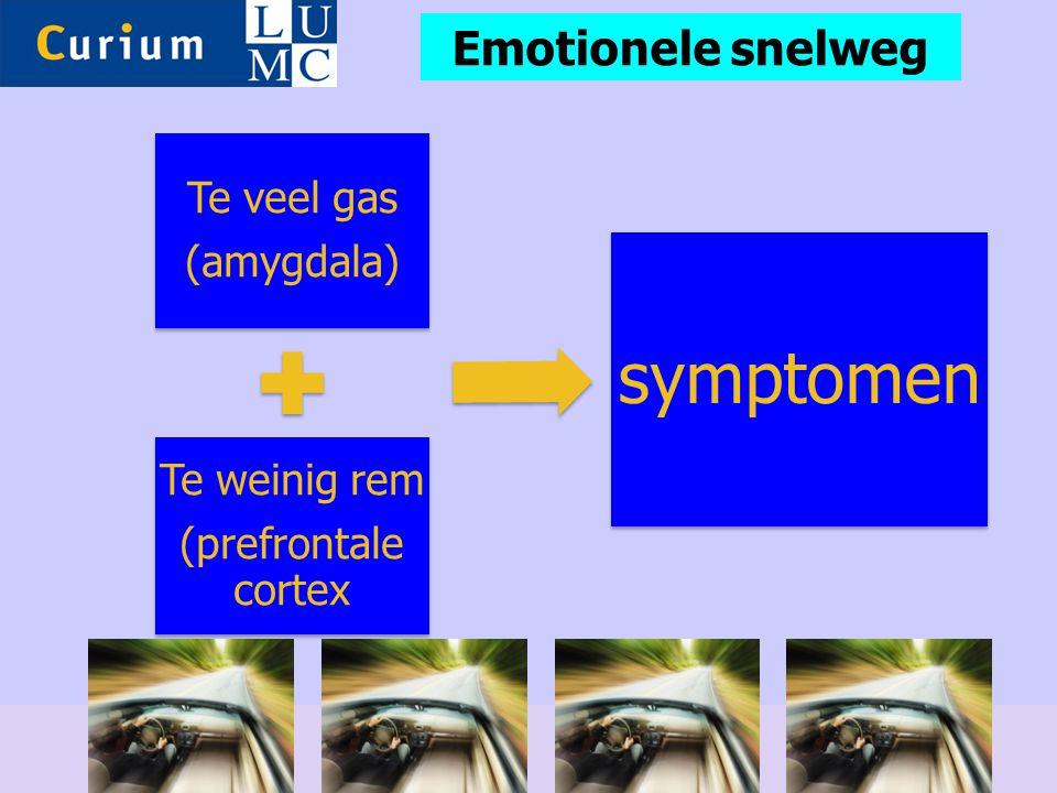 Emotionele snelweg 31 (amygdala) Te veel gas (prefrontale cortex