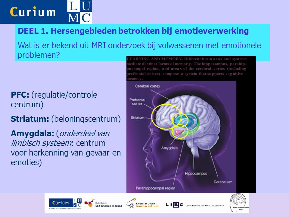DEEL 1. Hersengebieden betrokken bij emotieverwerking