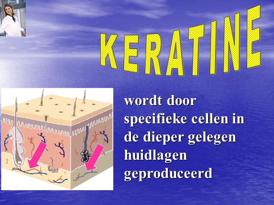 KERATINE wordt door specifieke cellen in de dieper gelegen huidlagen geproduceerd