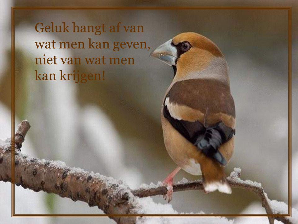 Geluk hangt af van wat men kan geven, niet van wat men kan krijgen!
