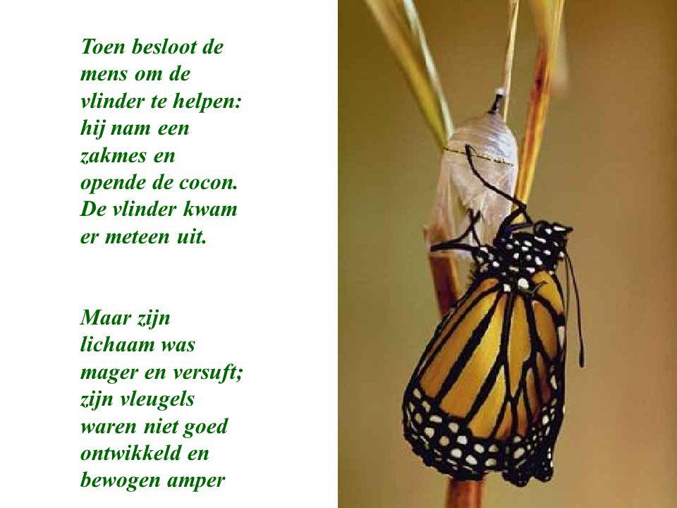 Toen besloot de mens om de vlinder te helpen: hij nam een zakmes en opende de cocon. De vlinder kwam er meteen uit.