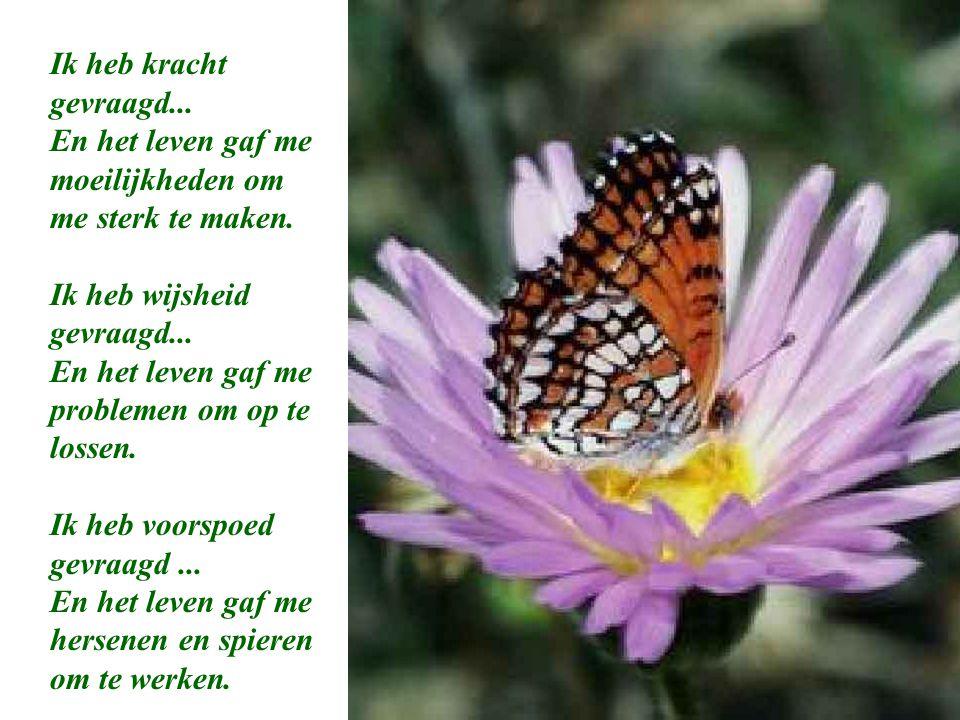 Ik heb kracht gevraagd... En het leven gaf me moeilijkheden om me sterk te maken. Ik heb wijsheid gevraagd...