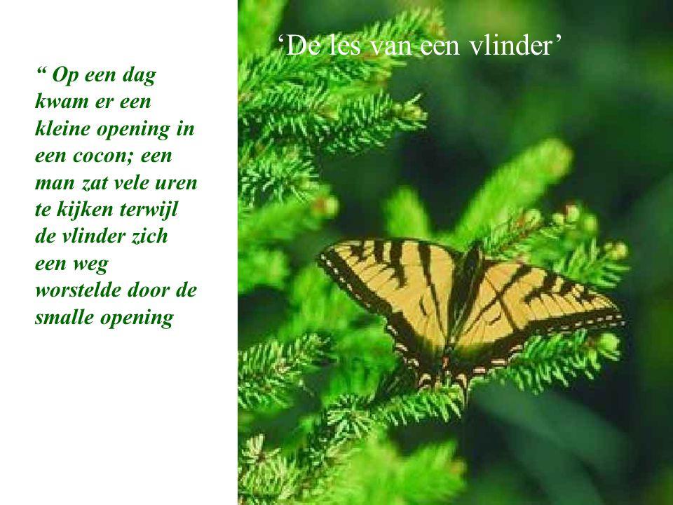 A Butterfly's Lesson 'De les van een vlinder'