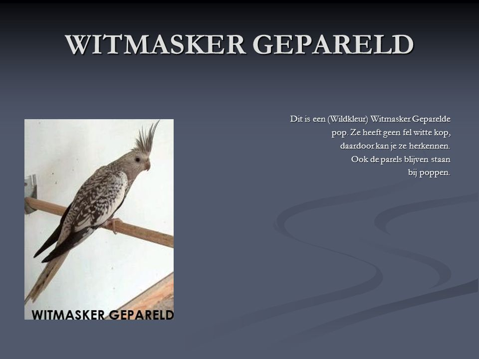 WITMASKER GEPARELD Dit is een (Wildkleur) Witmasker Geparelde