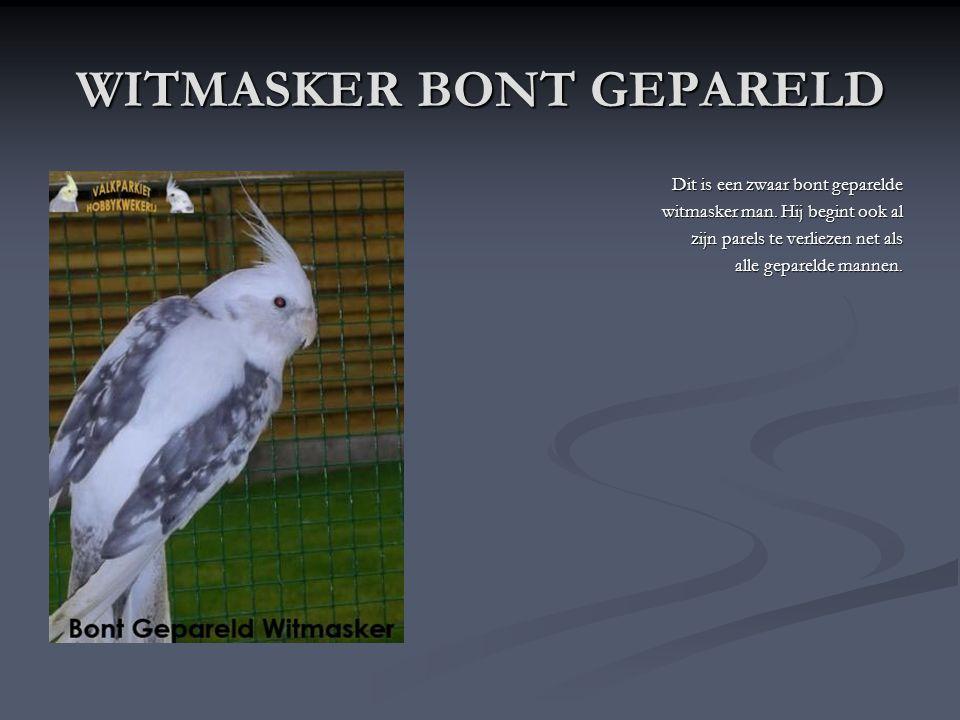 WITMASKER BONT GEPARELD