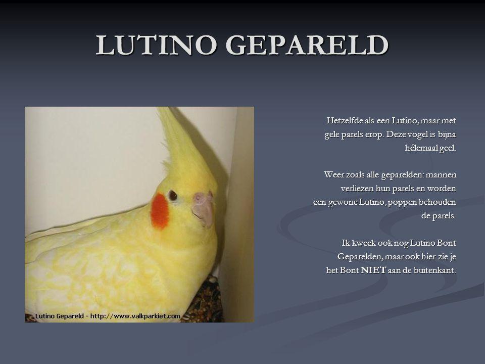 LUTINO GEPARELD Hetzelfde als een Lutino, maar met