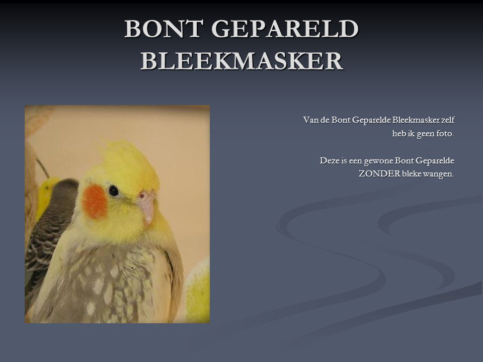 BONT GEPARELD BLEEKMASKER