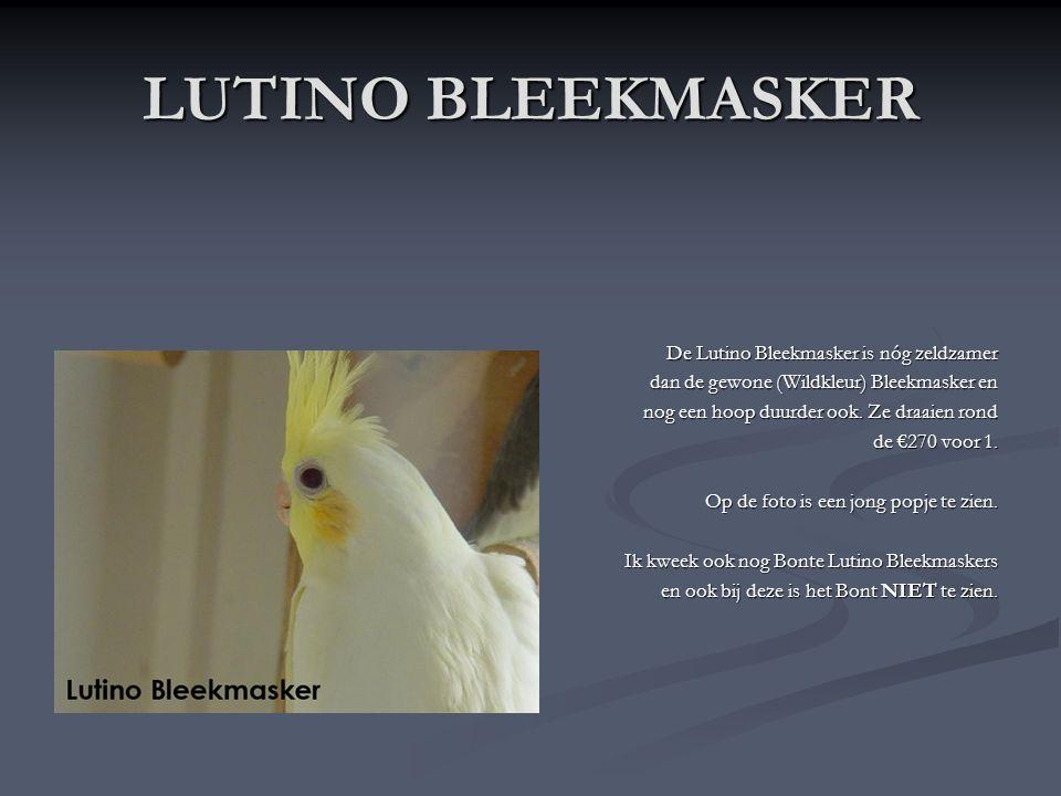 LUTINO BLEEKMASKER De Lutino Bleekmasker is nóg zeldzamer