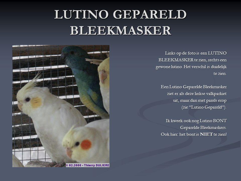 LUTINO GEPARELD BLEEKMASKER