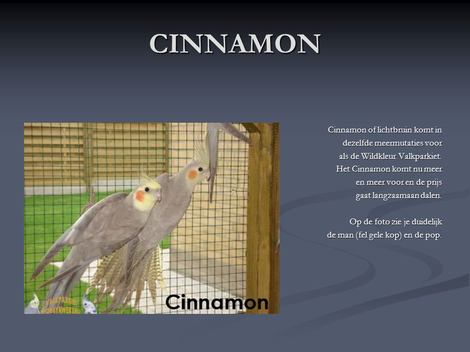 CINNAMON Cinnamon of lichtbruin komt in dezelfde meermutaties voor