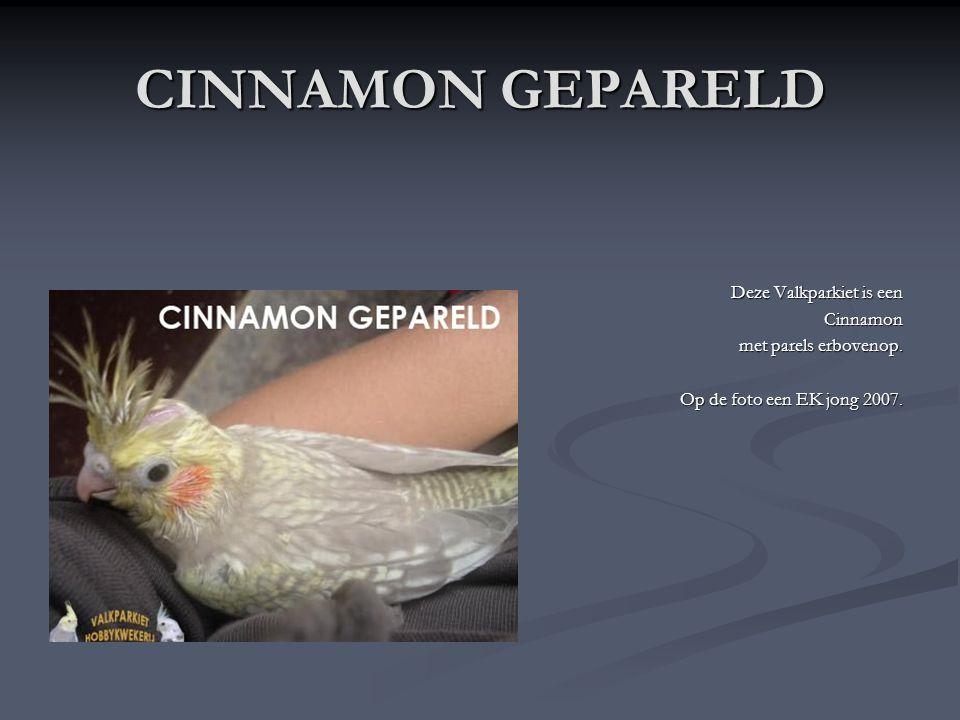 CINNAMON GEPARELD Deze Valkparkiet is een Cinnamon