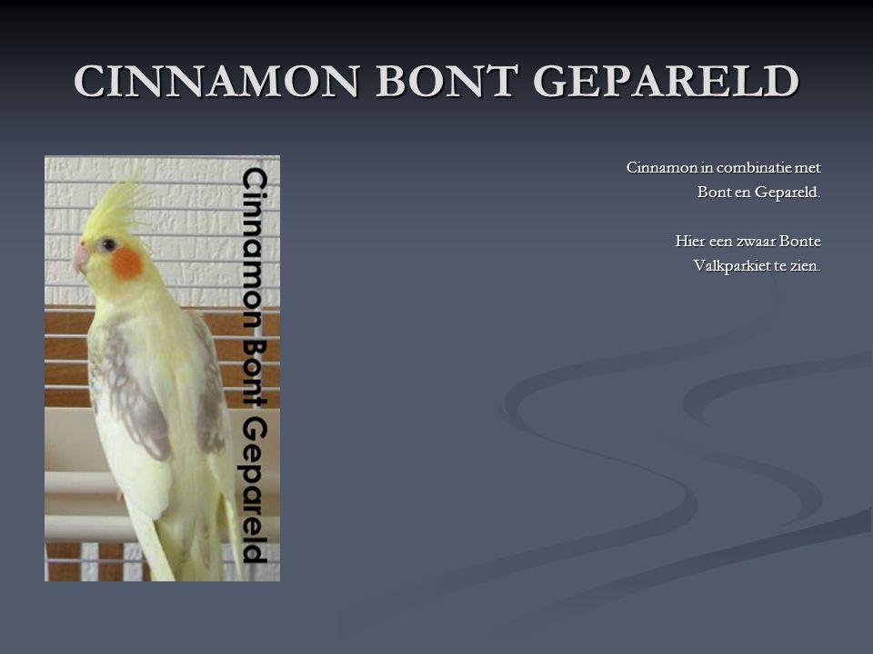 CINNAMON BONT GEPARELD