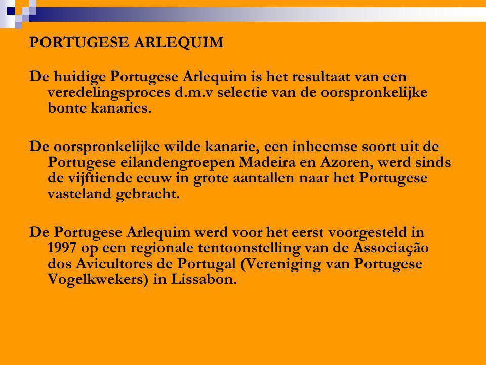 PORTUGESE ARLEQUIM De huidige Portugese Arlequim is het resultaat van een veredelingsproces d.m.v selectie van de oorspronkelijke bonte kanaries.