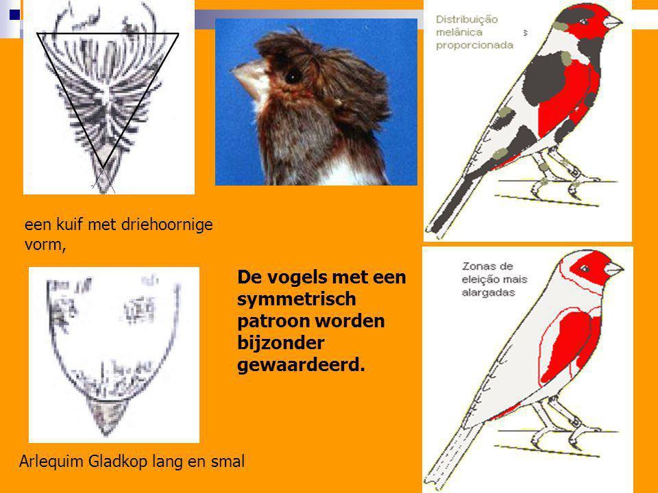 De vogels met een symmetrisch patroon worden bijzonder gewaardeerd.