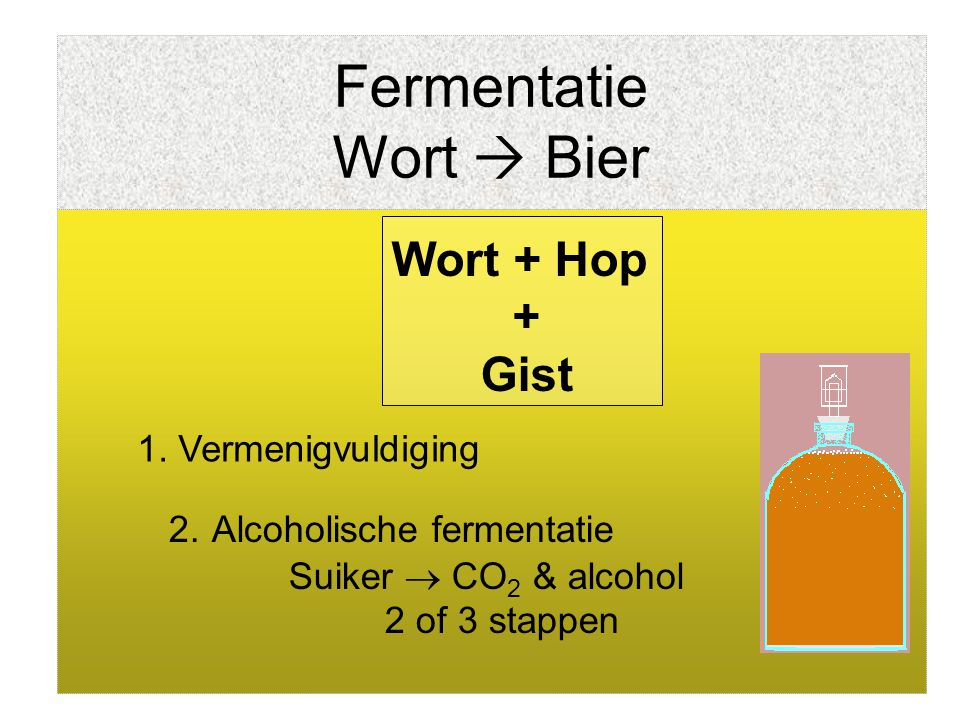 Fermentatie Wort  Bier