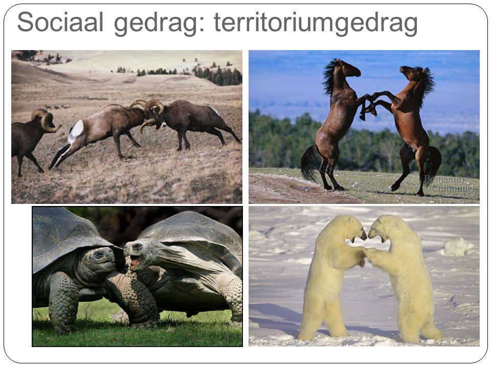 Sociaal gedrag: territoriumgedrag