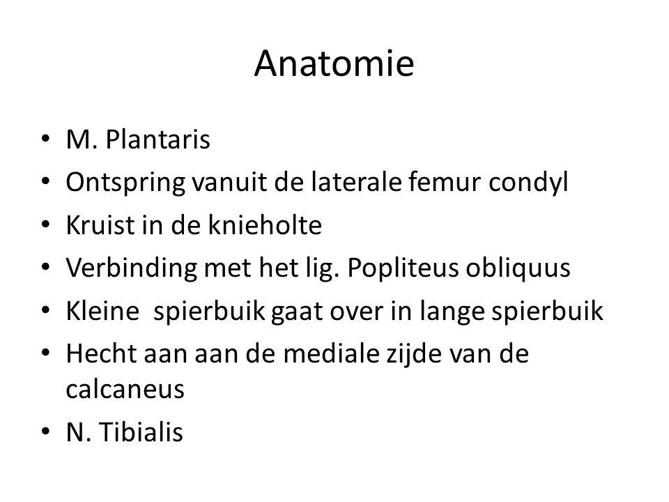 Anatomie M. Plantaris Ontspring vanuit de laterale femur condyl